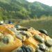 朝からご当地★黒豆パン