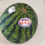 大栄スイカの季節到来ヽ(^o^)丿